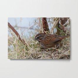 Small Bird Metal Print