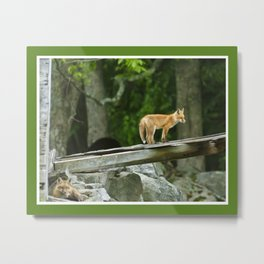 Fox on the Hunt Metal Print