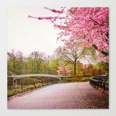 Cherry Blossoms Romance Canvas Print