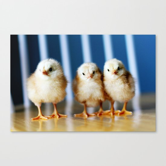 buckeye chicks Canvas Print