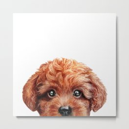 Toy poodle red brown Dog illustration original painting print Metal Print