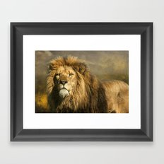 Lion on the alert Framed Art Print