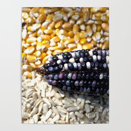 White, yellow and blue corn Poster