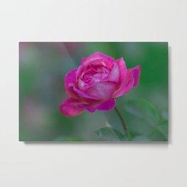 Surreal Pink Rose Metal Print