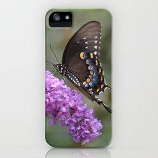 ✿ Butterfly εїз  Slim Case iPhone (5, 5s)