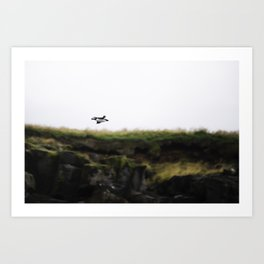Puffin in Flight Art Print