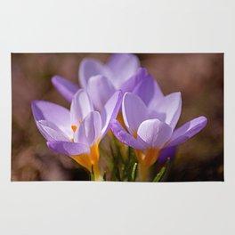 Blooming purple Rug