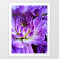 Dahlia - New World Art Print