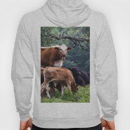 Cows Hoody
