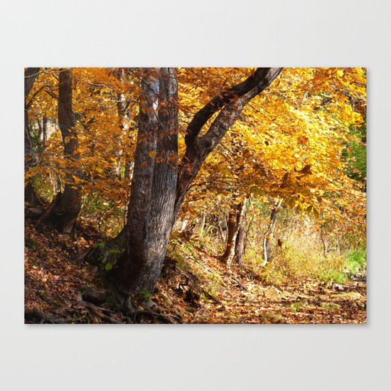 Fall afternoon IV Canvas Print