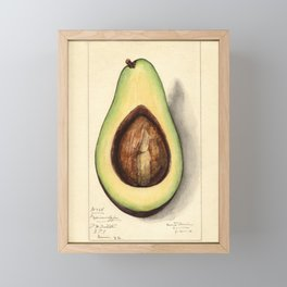 Botanical Avocado Framed Mini Art Print