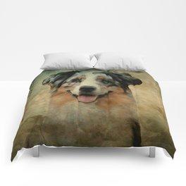 Australian Shepard - Aussie Comforters