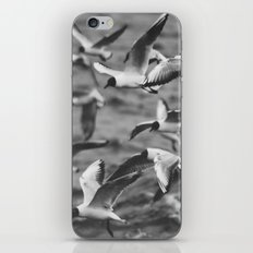 Larus #4 iPhone & iPod Skin