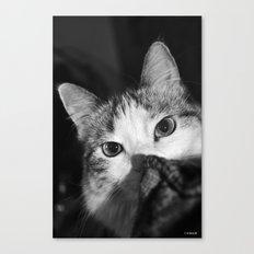 Stalking! Canvas Print