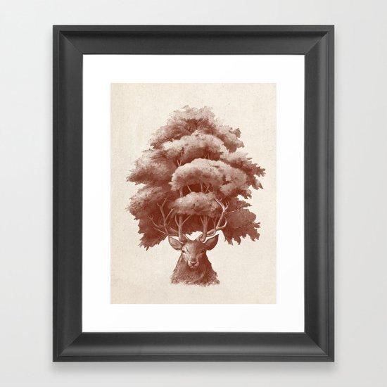 Old Growth  Framed Art Print