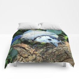 Blue Jay bird Comforters