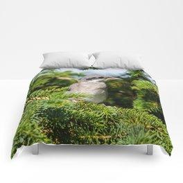 Fledgling Loggerhead Shrike Comforters