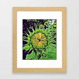 Blooming Sunflower Framed Art Print