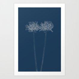 Agapanthus Blueprint Art Print