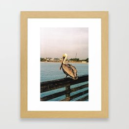 Florida Wildlife Framed Art Print