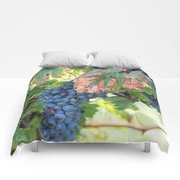 black grape grows on vineyard Comforters