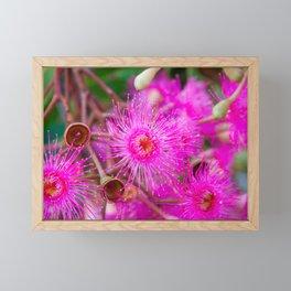 Flowering Gum. 2. The Flower. Australia. Framed Mini Art Print