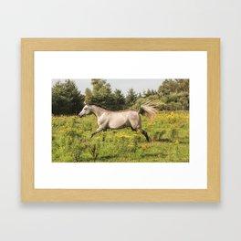 Through the Meadow Framed Art Print