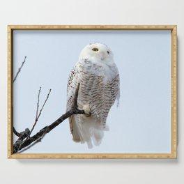 Lofty Vision (Snowy Owl) Serving Tray