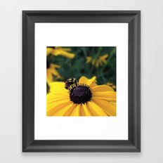 Lone Bee Framed Art Print