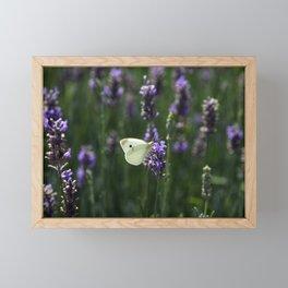 White Butterfly in a Lavender Field Framed Mini Art Print