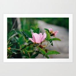 Wildflower: Rose Art Print