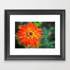 Macro Red Flower Framed Art Print