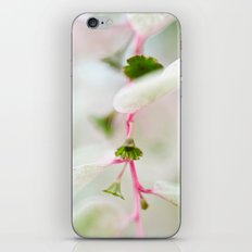 Tiny Trumpet Flower iPhone & iPod Skin