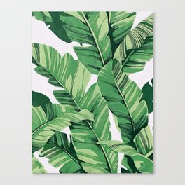 Tropical banana leaves V Canvas Print