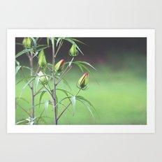 Nature's Zen Art Print