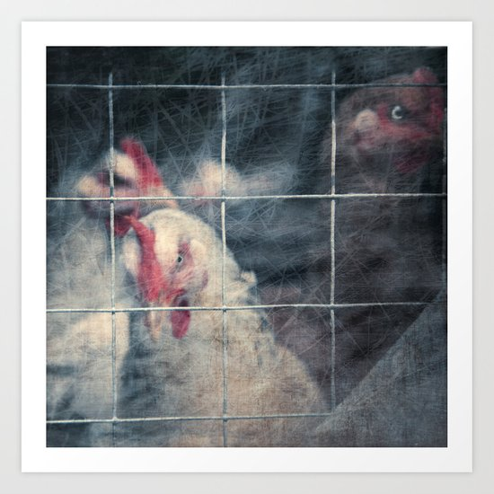 caged chickens Art Print