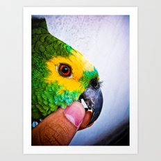 Parrot Brazilian Colors Art Print