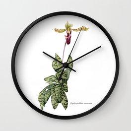Paphiopedilum memoria var. Cha Cha Spritz - Lady-slipper orchid Wall Clock