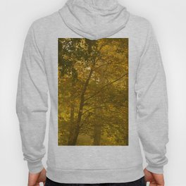 Forest in Fall Color Autumn Scene #decor #society6 #buyart Hoody