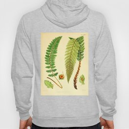 Vintage Botanical illustration, 1916 (Fern) Hoody