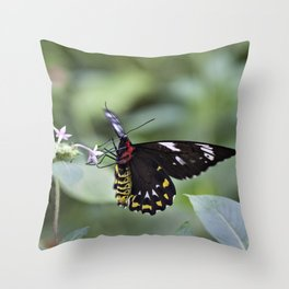 Female Birdwing Butterfly Throw Pillow