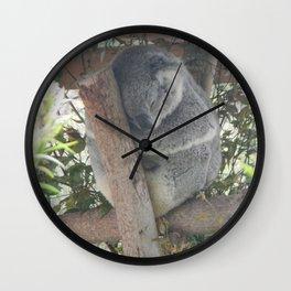 Koala sleeping in Australia Wall Clock