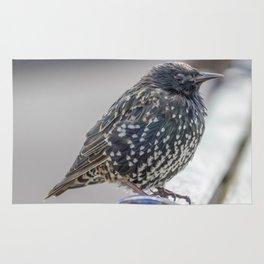 Starling. Rug