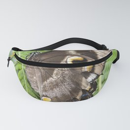 Ulysses  Butterfly Fanny Pack