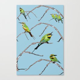 Rainbow Bee-eater (Merops ornatus) by Chrissy Wild Canvas Print