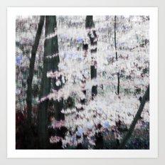 WHITE WOODS Art Print