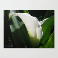 Zantedeschia named Crystal Blush Canvas Print