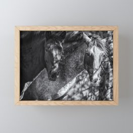 Mica and Malpais BW - Pryor Mustangs Framed Mini Art Print
