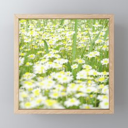 Field of daisies Framed Mini Art Print
