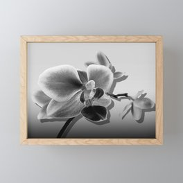Orchid in Black and White Contemporary Art A537 Framed Mini Art Print